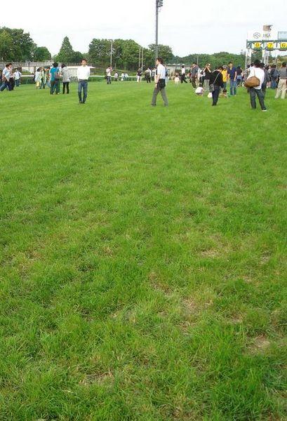 日本の競馬場の芝.jpg