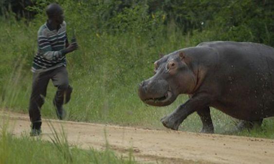 Hippo(カバ)恐い.jpg