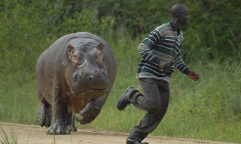 Hippo(カバ)恐い1.jpg