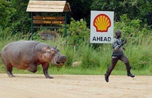 Hippo(カバ)恐い2.jpg