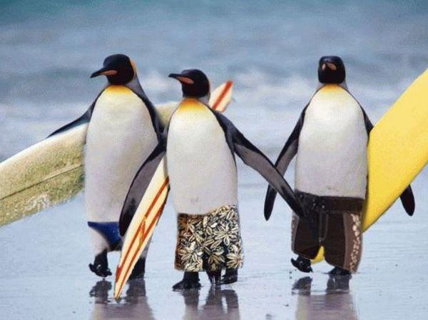 Penguinサーファー.jpg